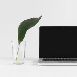 Plant with laptop